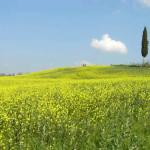 Barberino Val d'Elsa, Chianti, Toscana, Italia. Autore e Copyright Marco Ramerini