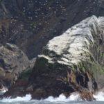 Uccelli marini, Capo Horn, Cile. Autore e Copyright Marco Ramerini