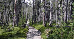 Parco Nazionale Svizzero, Grigioni, Svizzera. Autore e Copyright Marco Ramerini