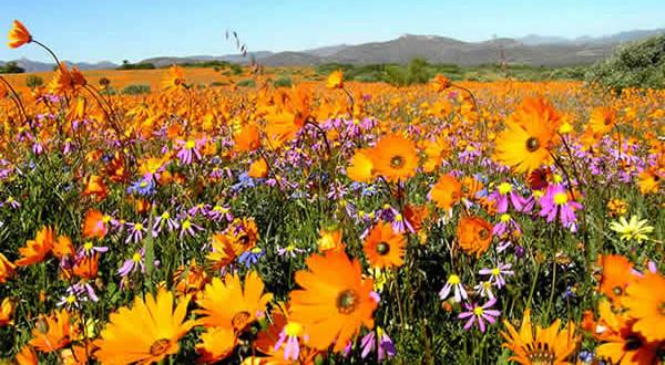 Namaqualand, Sudafrica. Author and Copyright Marco Ramerini