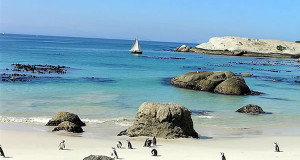 Pinguini a Foxy Beach, Boulders Beach, Città del Capo, Sudafrica. Autore e Copyright Marco Ramerini