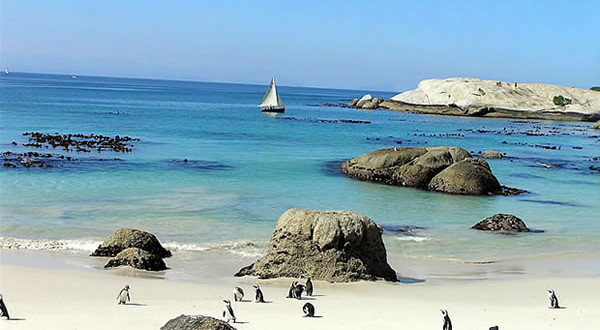 Pinguini a Foxy Beach, Boulders Beach, Città del Capo, Sudafrica. Autore e Copyright Marco Ramerini