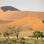 Deserto del Namib, Namib-Naukluft, Namibia. Author and Copyright Marco Ramerini