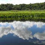 Marimbus Pantanal, Bahia, Brasile. Author and Copyright Marco Ramerini..
