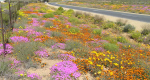 Namaqualand, Sudafrica. Author and Copyright Marco Ramerini.