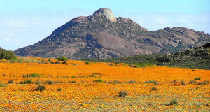 Namaqualand, Sudafrica. Author and Copyright Marco Ramerini