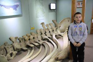 Andrea, davanti ad uno scheletro di balena, Museo maggiorino Borgatello, Punta Arenas, Cile. Autore e Copyright Marco Ramerini