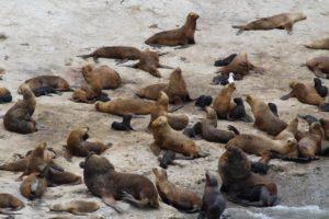Punta Pirámide, Penisola Valdés, Argentina. Autore e Copyright Marco Ramerini
