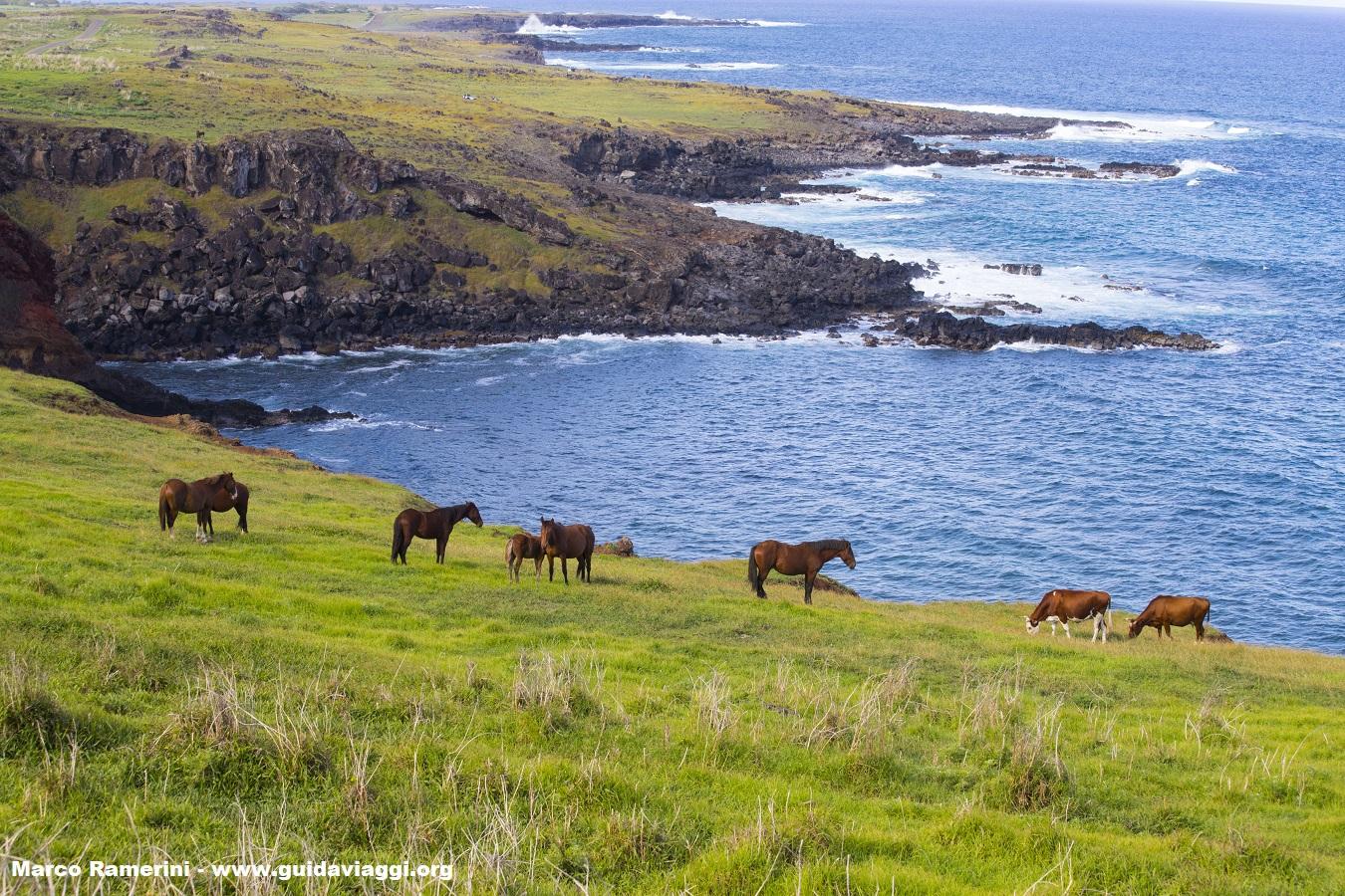 Cavalli lungo le coste dell'Isola di Pasqua, Cile. Autore e Copyright Marco Ramerini