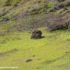 Rano Raraku crater, Isola di Pasqua, Cile. Autore e Copyright Marco Ramerini.