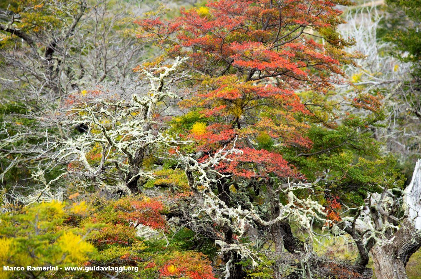 Serrano, Parco Nazionale Torres del Paine, Cile. Autore e Copyright Marco Ramerini