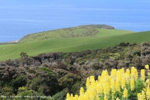 Catlins, Nuova Zelanda. Autore e Copyright Marco Ramerini