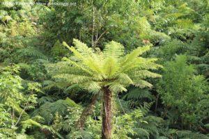 Vegetazione, Doubtful Sound, Nuova Zelanda. Autore e Copyright Marco Ramerini