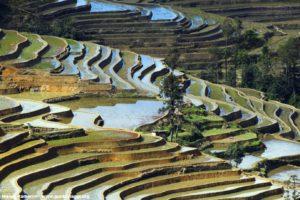 Risaie, Yuanyang, Yunnan, Cina. Autore e Copyright Marco Ramerini..