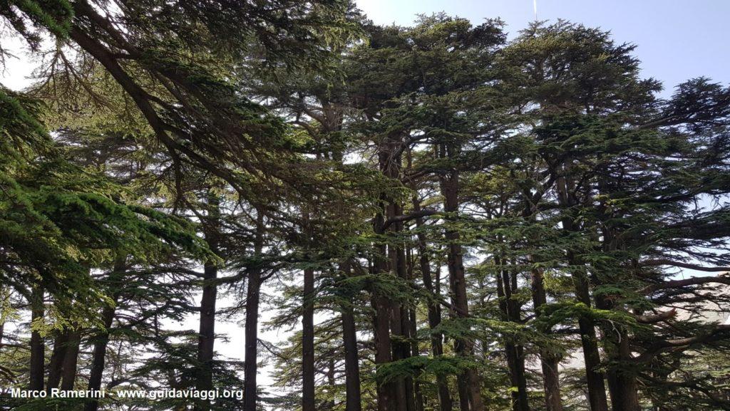 La foresta dei Cedri di Dio, Libano. Autore e Copyright Marco Ramerini