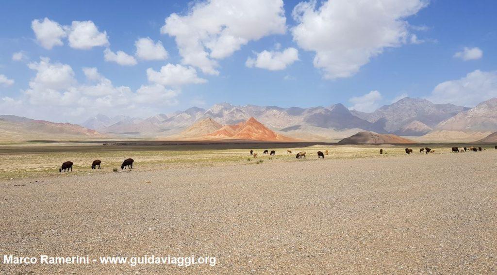Animali al pascolo dopo la frontiera tra Kirghizistan e Cina. Autore e Copyright Marco Ramerini